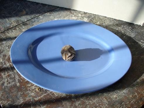 Comida frugal (2008) - F. Tomsich