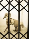 37_the-horse-inside-the-flat